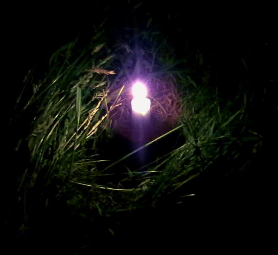Candle in the grass
