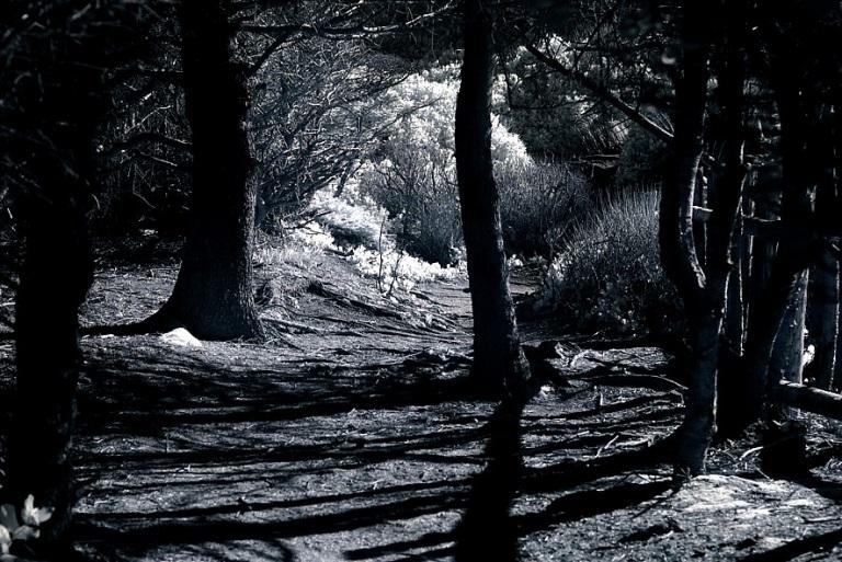 Veleda Thorsson Photography