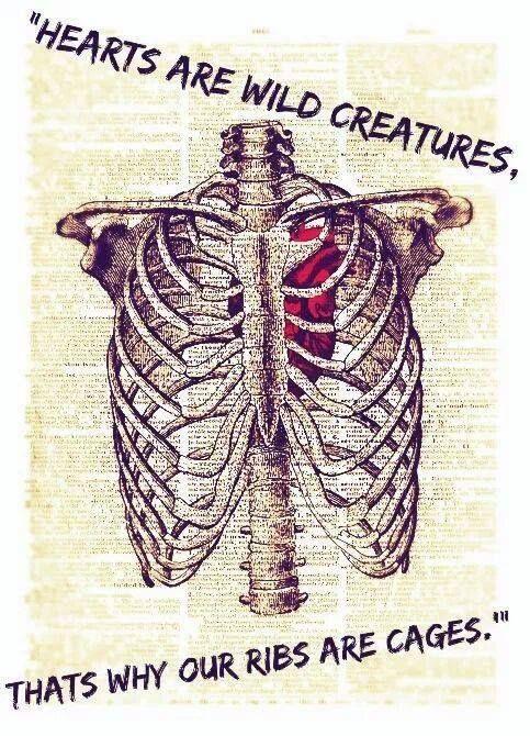 heart-ribs-cage