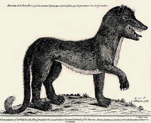Gevaudan wolf