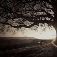 Il testamento di un albero