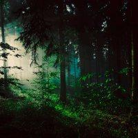 Solitario bosco ombroso