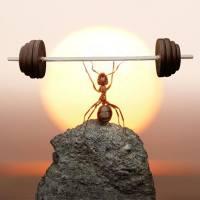 La cicala e la formica 🐜